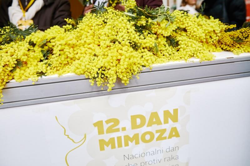 12. dan mimoza (1)